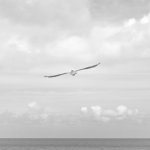 Seagull | Franciscan Peacemaking